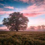 Beautiful field and tree