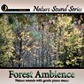Relaxing Forest Ambience - with relaxing music Picture
