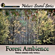 Relaxing Forest Ambience - nature sounds only version