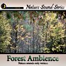 Relaxing Forest Ambience - nature sounds only version Picture